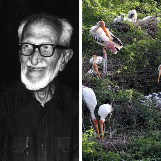 Salim Ali birds man of india