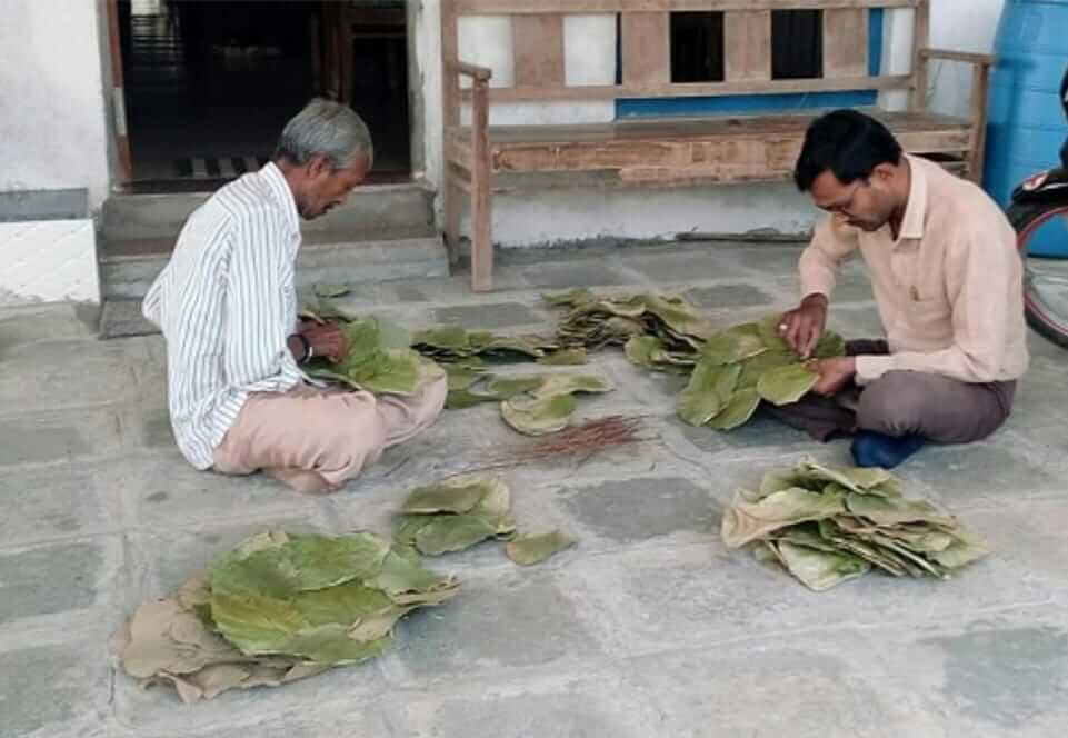making leaf plates