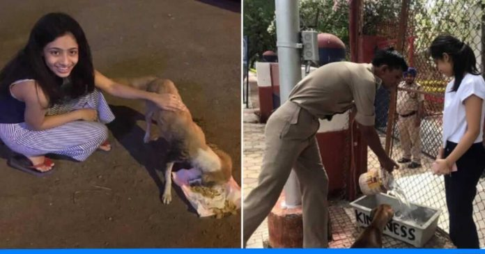 15 years old chandani feeds stray animals daily