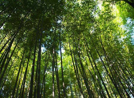 Engineer earning lakhs from Bamboo Farming