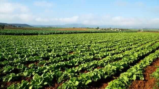 Ankit Raghav starts Organic Farming after restaurant business shuts