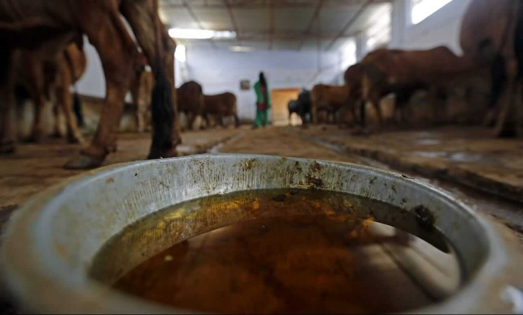 Production of crops in field increases while doing farming from indigenous extracts and cow dung
