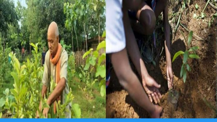 anand kishore mishra from Jamui Bihar plants more than five thousand trees in his village