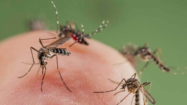 prepare natural mosquito repellent at home from herbal products