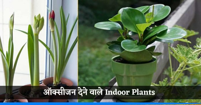 Plants which give oxygen