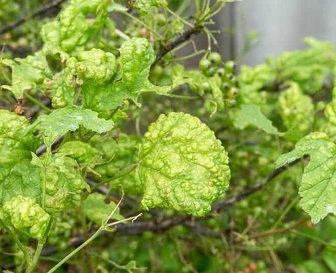 home remedy for protecting plants during monsoon season