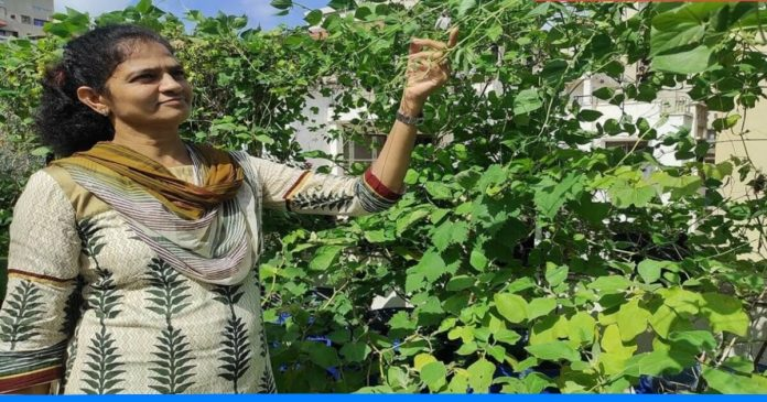 Know about the vegetables to be sown in the month of September
