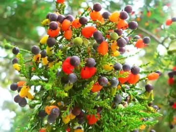 Know about tree of forty plant who gives 40 types of fruits on a single tree