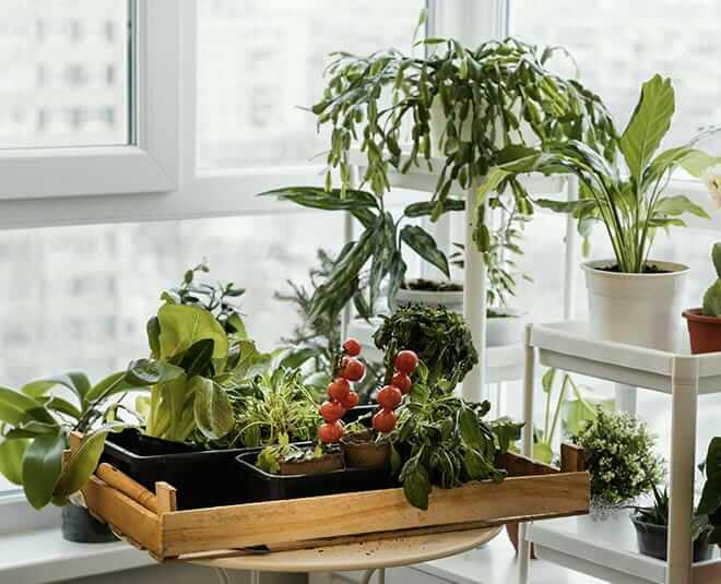 know about plants that can be grown from leaves